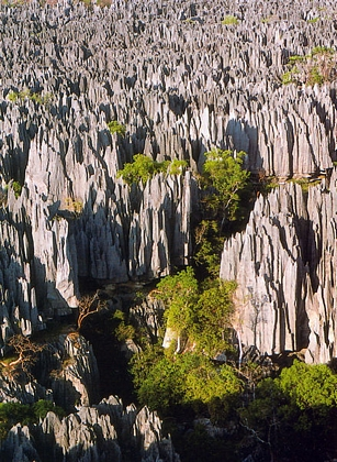 El bosque de piedra de Madagascar